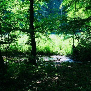 Tagesseminar / Wandern im Deister