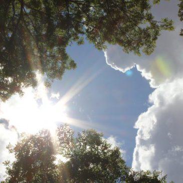 Meditation und Beratung jetzt online