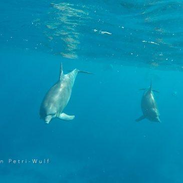 neues Video: Delfine Herzberührung im offenen Raum