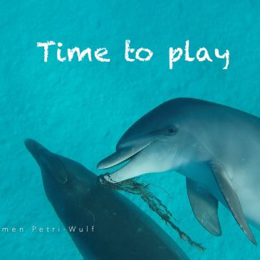 Time to play – neues Delfinvideo :-)